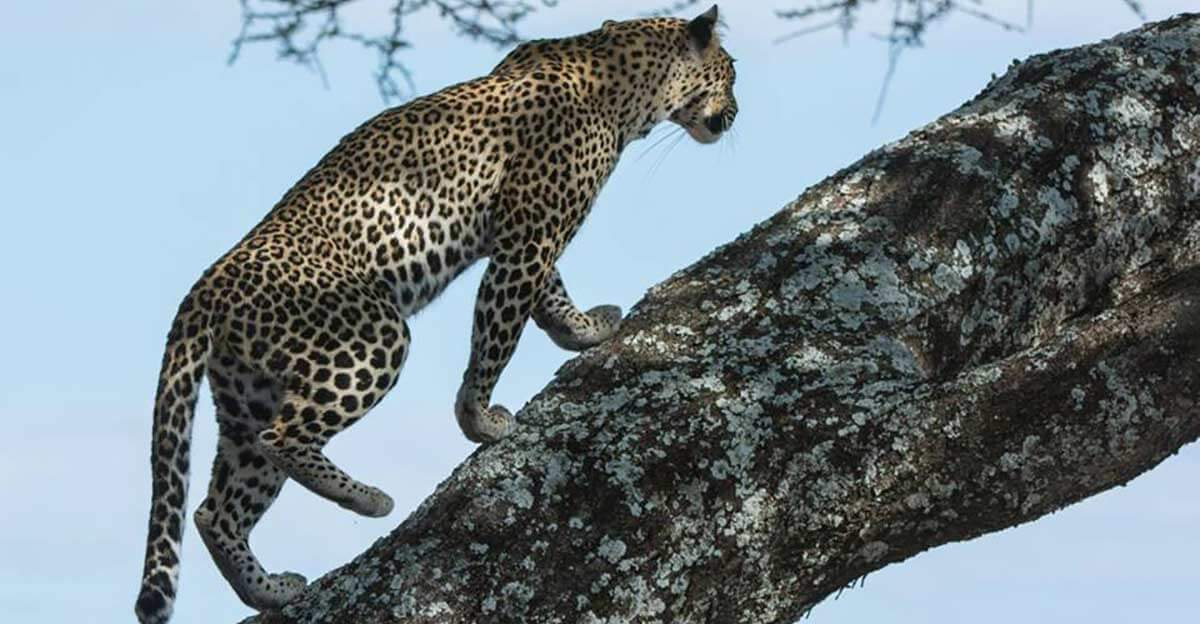アフリカのサファリツアー