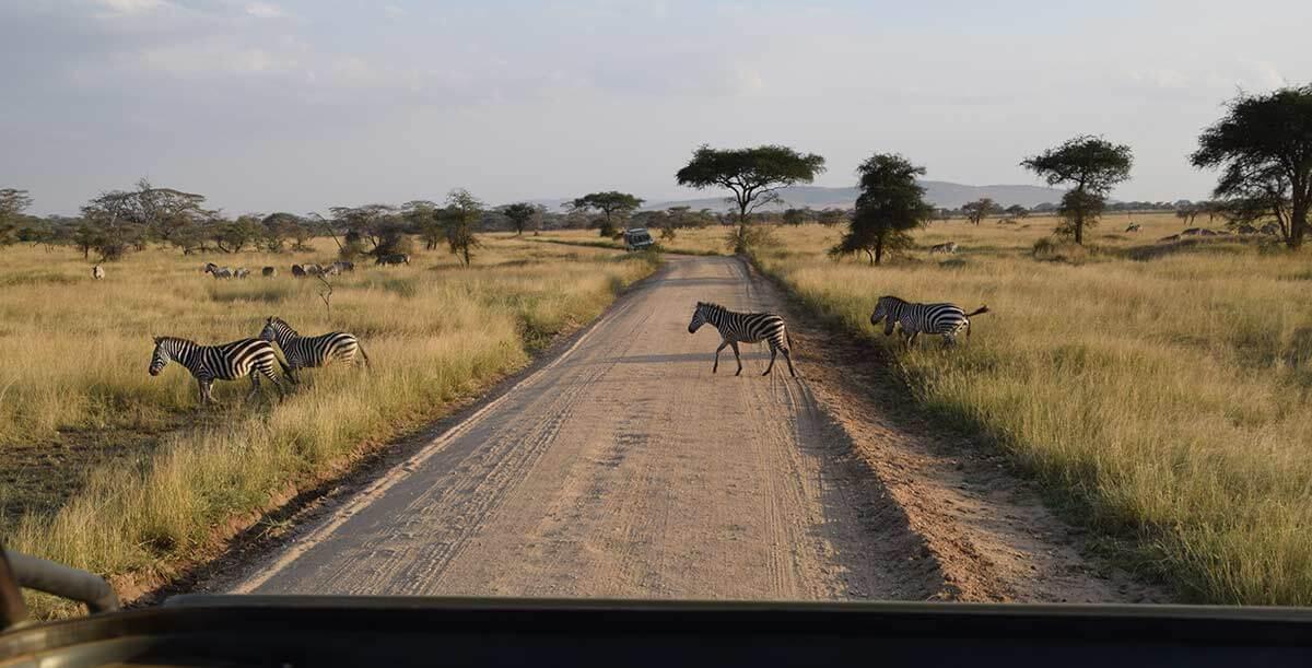アフリカ野生動物サファリ