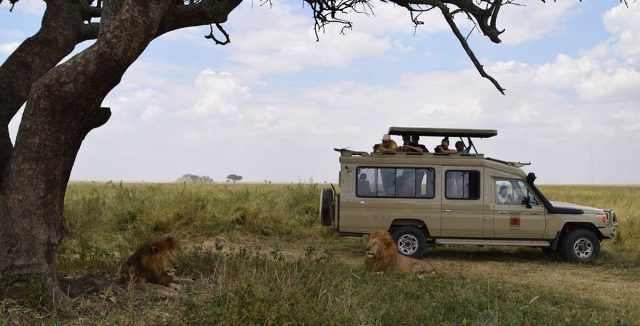 african luxury wildlife safaris