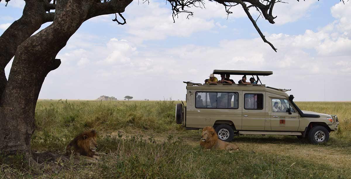 african luxury wildlife safaris