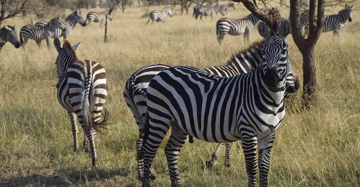 Ngorongoro crater safari tours
