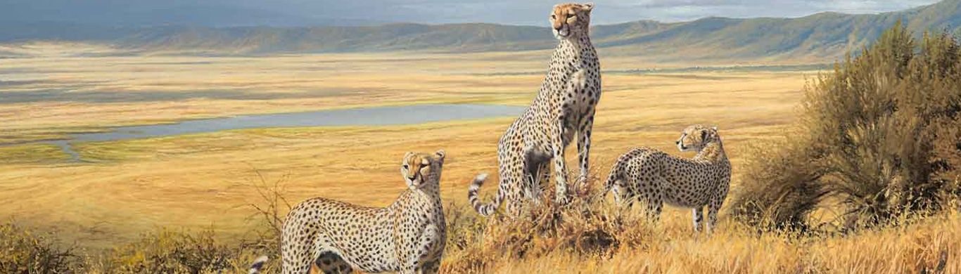 New Year is AHEAD! Rock your adventure tours in Tanzania