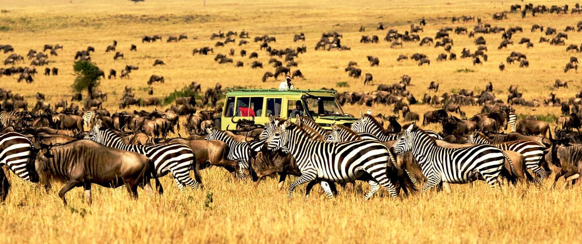 Serengeti National Park >> 10 Reasons To Visit Serengeti National Park
