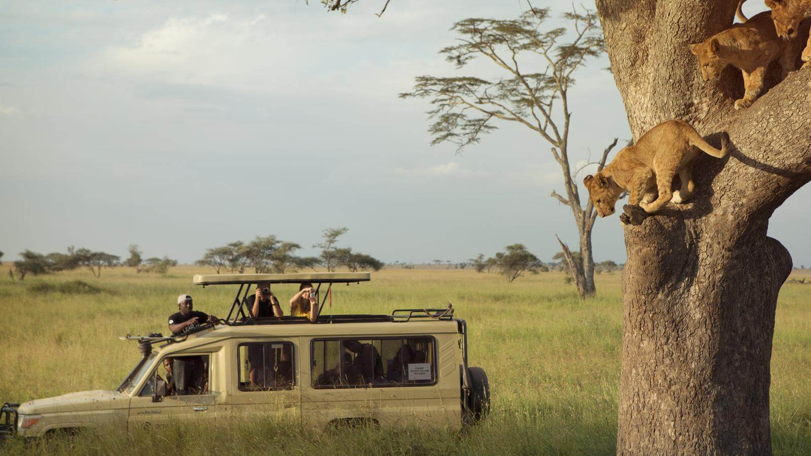 Bucket List of 10 Interesting Things to Do On a Safari in Tanzania