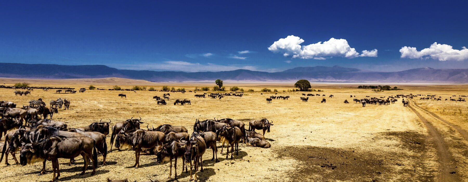Ngorongoro Crater Safari: One of the Best Place to Visit in August