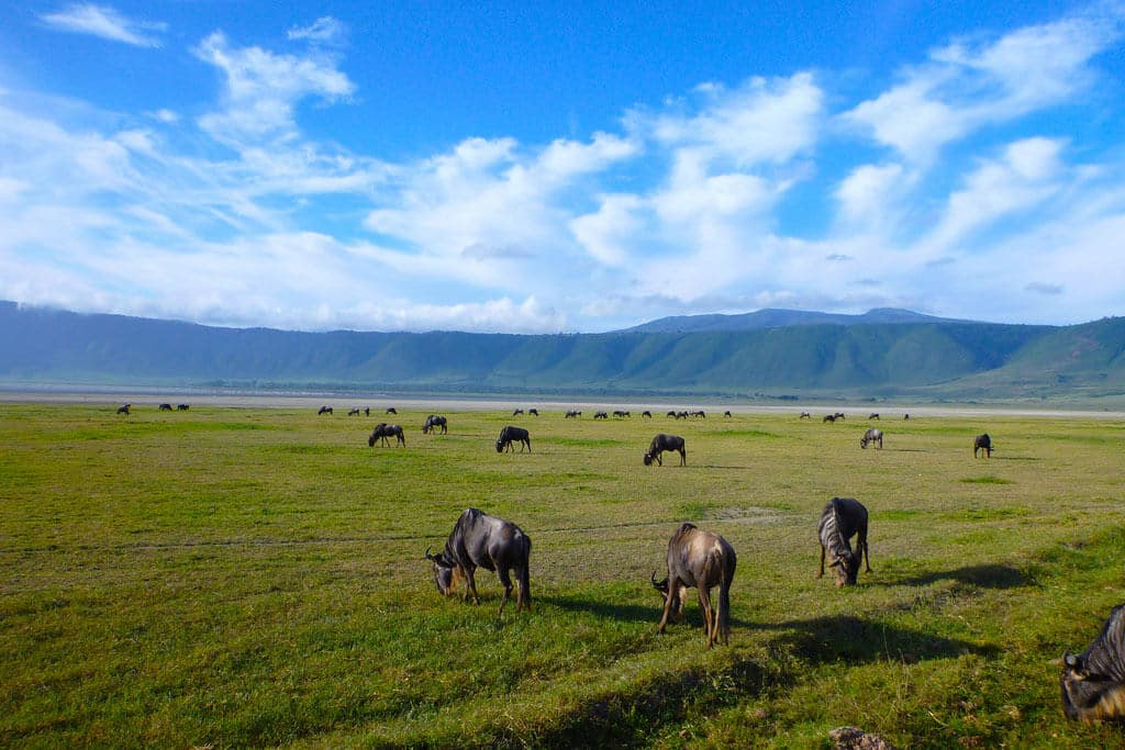 Ngorongoro crater safari Tours