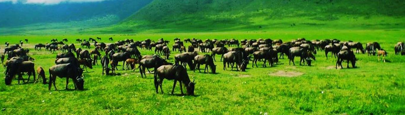Best 5 Incredible Destinations for a Wildlife Safari in Tanzania