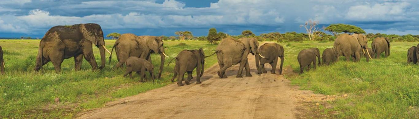 Best Time to Book a Safari Tour In Tanzania