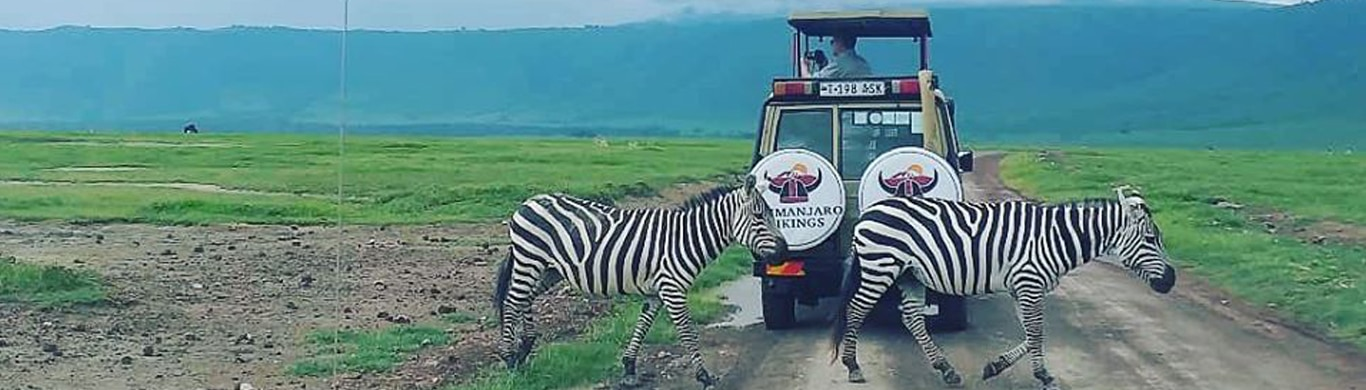 What Makes an African Safari Tour So Special