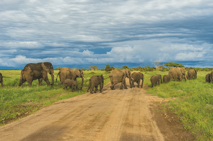 Best Time to Book a Safari Tour In Tanzania