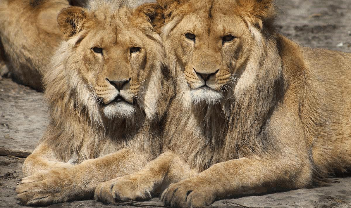 6 Tage Safari