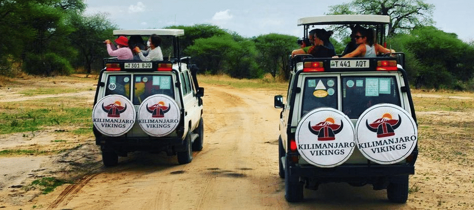 Safari Tours in Tanzania