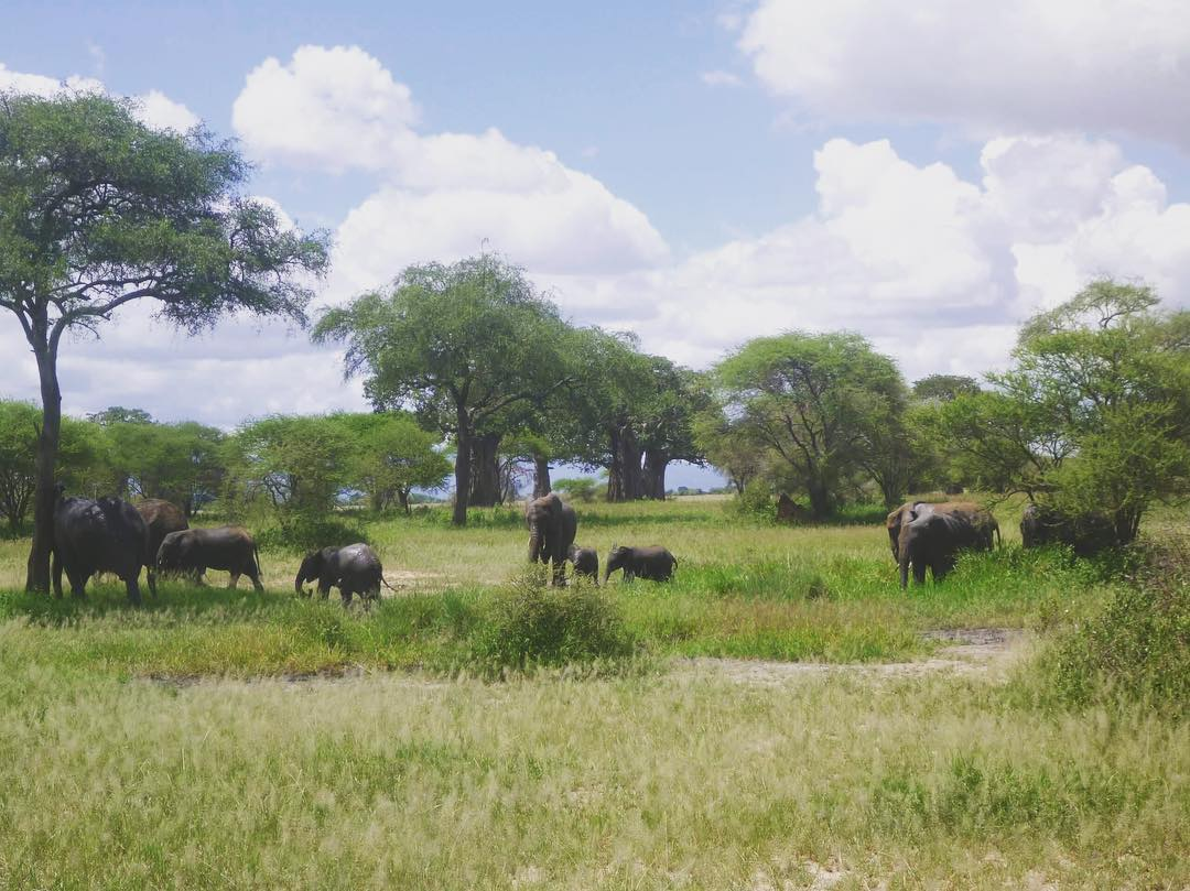 Get a chance to trip on a safari ride in Africa