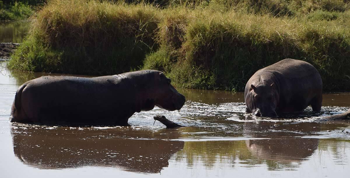 The Tanzania safari is famous for Serengeti