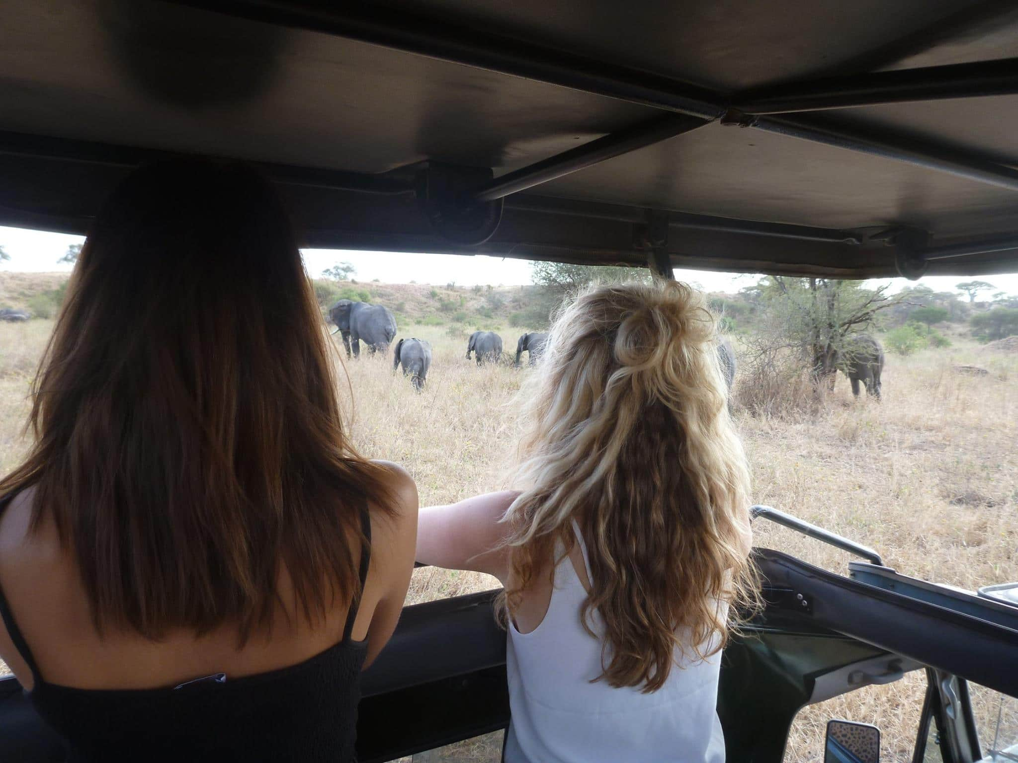 Enjoy the best African safari