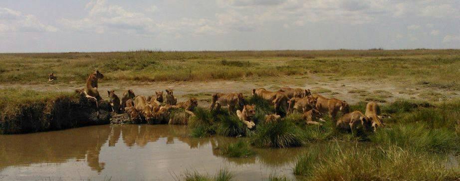 Best Safari Tours in Tanzania!